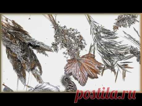 Экономия! Веточки и листья для новогоднего декора из леса Декор из природного материала - YouTube