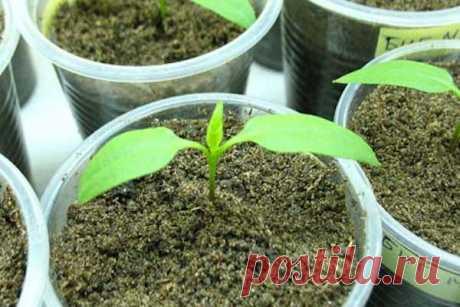 Два листочка у растения – сигнал начать работу!