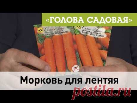 Голова Садовая - Морковь для лентяя