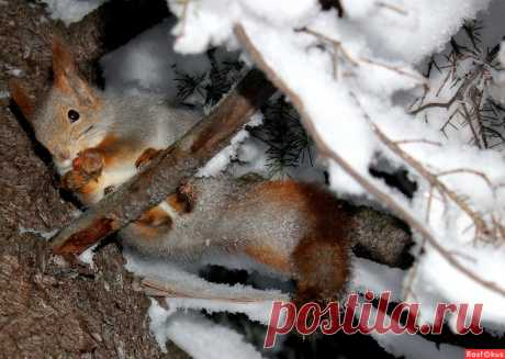 Фото: Спряталась.... Фотолюбитель Татьяна Соловьева (Тата). Фото животных - Фотосайт Расфокус.ру