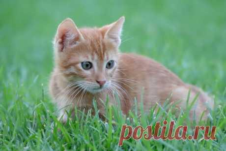 Можно ли играть с кошкой лазерной указкой, и почему зоозащитники против таких развлечений