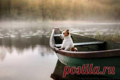 «Кто это там раскачивает лодку?» Автор фото – Анна Аверьянова: nat-geo.ru/photo/user/296624/