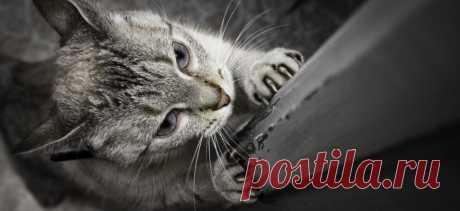 Как отучить кошку царапать мебель | PetTips