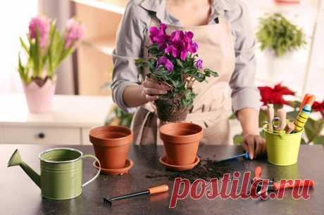9 лучших подкормок для комнатных цветов Цветы исполняют не только эстетическую функцию, некоторые растения очищают и дезинфицируют воздух, поглощают вредные примеси, выделяют эфирные масла и фитонциды. Здоровые, красивые и пышно цветущие растения сложно вырастить без натуральных подкормок.