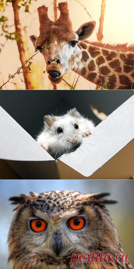 Зоопарк субличностей. Кто живет в вашей голове?