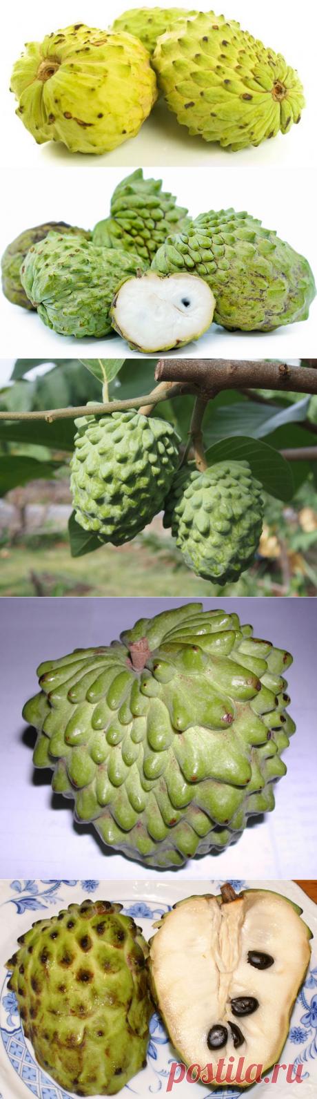 Самые необыкновенные фрукты со всего мира (часть 20)