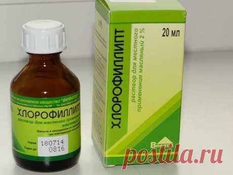 «Хлорофиллипт»: цена  — копейки! 15 рецептов проверенных временем | Всегда в форме!