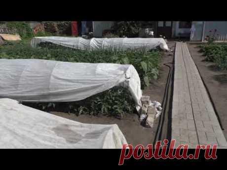 Защищаю растения от палящего солнышка