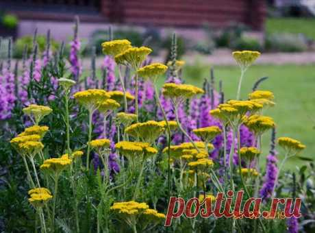 """КОПИЛКА ЛАНДШАФТНЫХ ИДЕЙ. Планируем свой сад: интересные сочетания растений и цветов (в альбом """"Интересные сочетания"""" - https://vk.com/album-9333433_124322418 )  #цветоведение #сочетание_растений #композиция_цветника"""