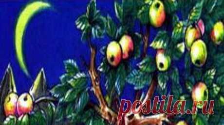 Молодой принц и золотые яблоки(сказка)