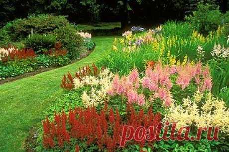 Календарь цветения многолетников (с таблицей).