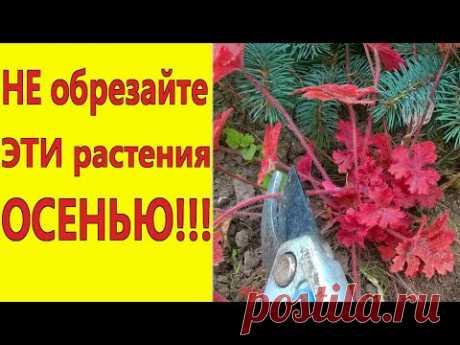 МНОГОЛЕТНИКИ и КУСТАРНИКИ,которые НЕЛЬЗЯ ОБРЕЗАТЬ на зиму/Какие растения нельзя обрезать осенью. - YouTube