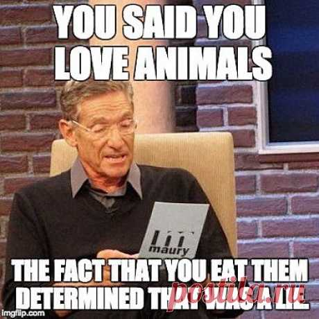 "Mercy For Animals on Instagram: ""LOL!! #govegan #vegansofig #mercyforanimals #veganhumor #animals #maury"" 4,947 Likes, 228 Comments - Mercy For Animals (@mercyforanimals) on Instagram: ""LOL!! #govegan #vegansofig #mercyforanimals #veganhumor #animals #maury"""