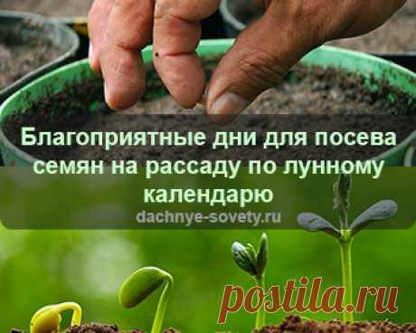 Благоприятные дни для посева семян на рассаду в 2020 году по посевному лунному календарю. Лунный календарь - таблица подскажет, когда садоводу сеять...