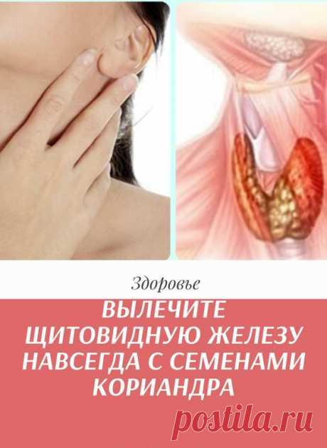 Вода с семенами кориандра является одним из лучших домашних средств для лечения проблем щитовидной железы за 8 дней. Использование этого средства может уменьшить симптомы гипотиреоза. Минералы, присутствующие в семенах кориандра, очень полезны для борьбы с инфекцией, которая может расти в организме.