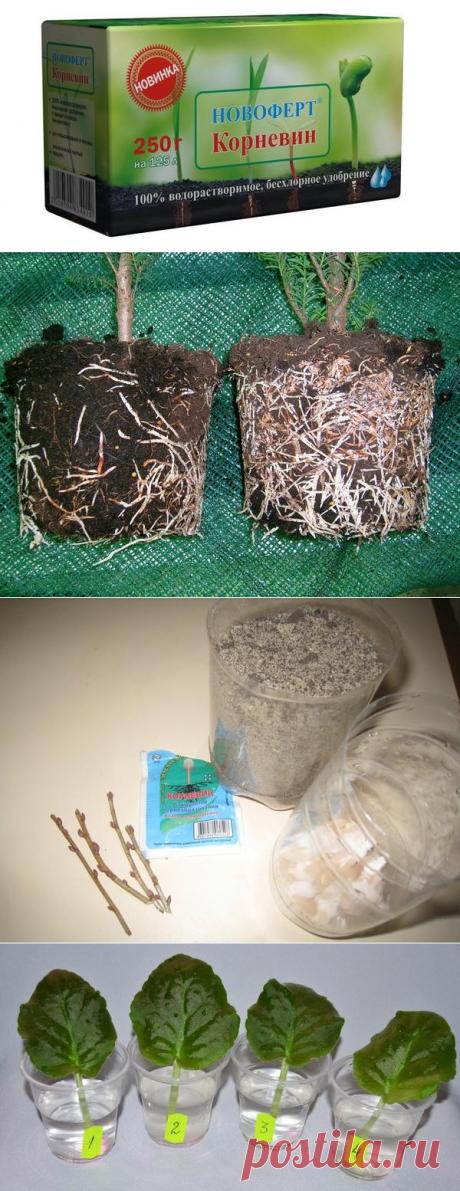 Корневин -  мощный биостимулятор растений =инструкция по применению корневина