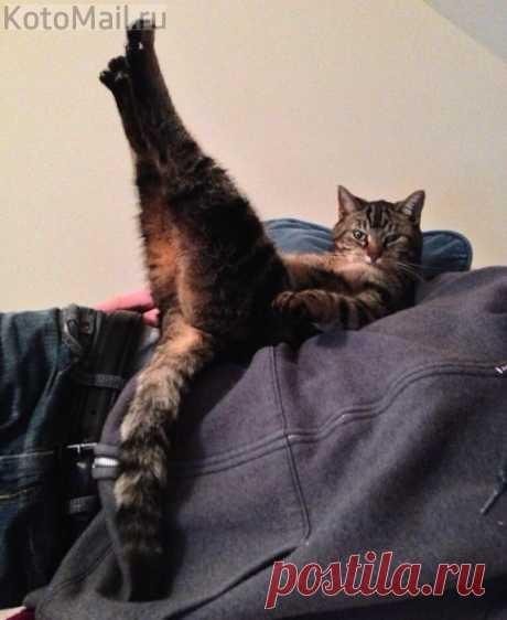 Фитнес - кот
