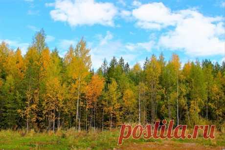 Сентябрь в лесу)))💛🌳💛🌲☀