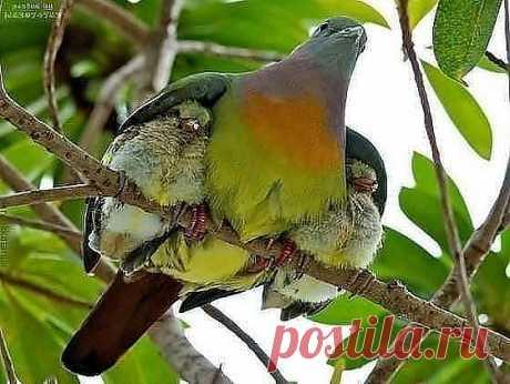 защита мамы