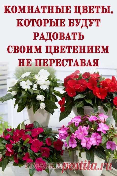 Безупречным дополнением интерьера являются комнатные цветы. Есть среди них такие, которые цветут практически круглый год. Зная об особенностях ухода за цветами различных видов, можно наслаждаться их цветением постоянно.