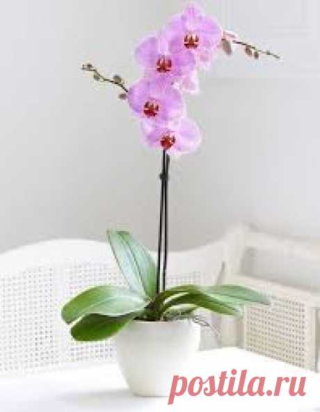 SECRETS OF SEATING OF ORCHIDS: THE PLANT TO TURN KAK 1 IN 100!