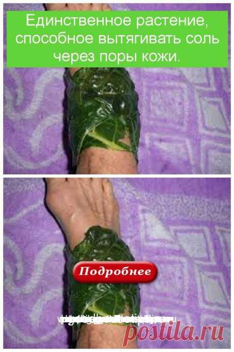 Единственное растение, способное вытягивать соль через поры кожи. - Коллекция домашних рецептов