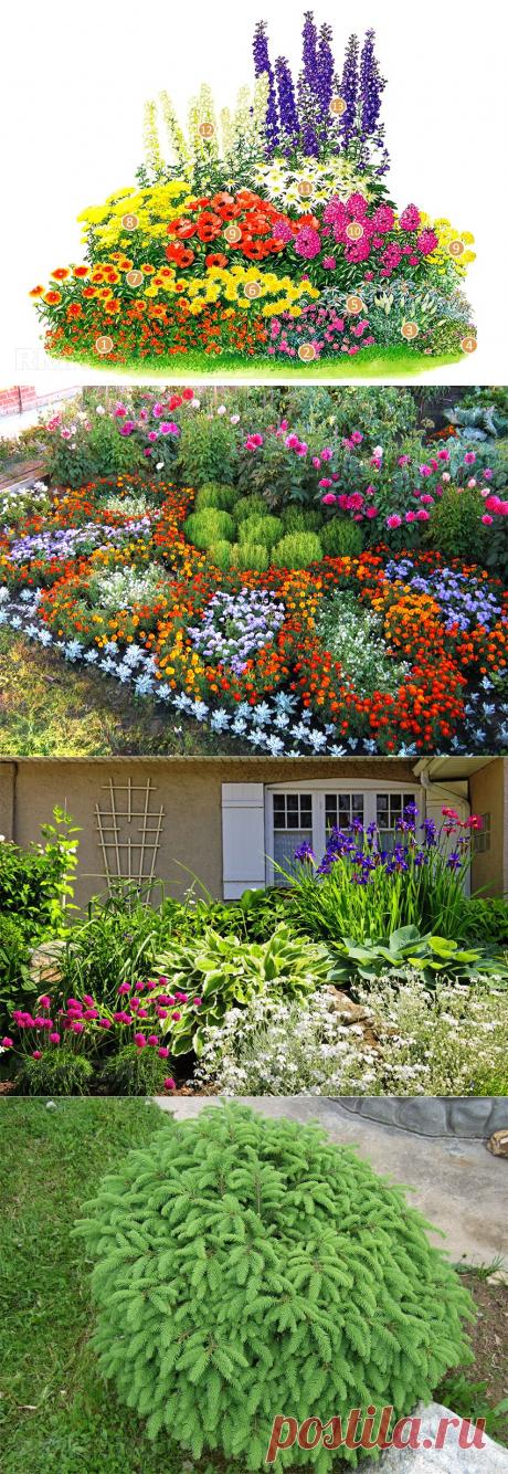 Как сделать клумбу и посадить цветы, цветущие все лето RMNT.RU