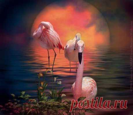 Фламинго на закате