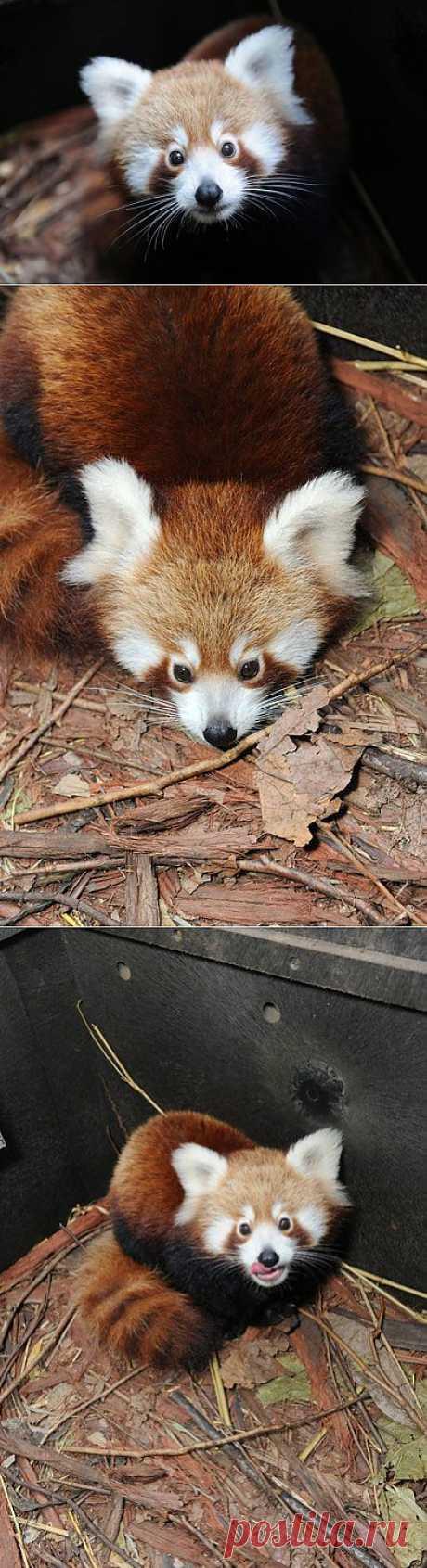 Firefox 45 | Fresher - Лучшее из Рунета за день
