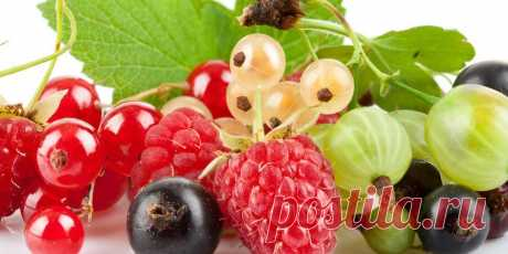3 useful rules will help to receive a rich harvest of berries! | 6 hundred parts