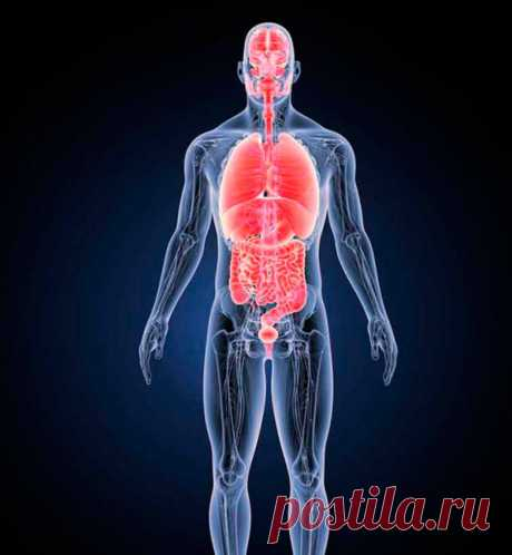 Как организм реагирует на периодическое голодание / Будьте здоровы
