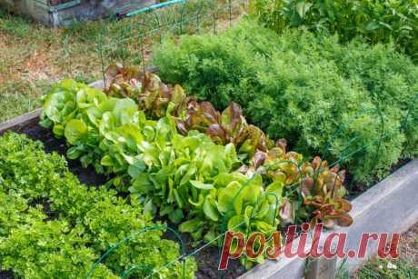 План совершенного огорода: 10 простых правил, которые облегчат ваш труд
