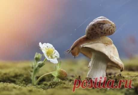 "\""Shooting stars\"". The author of a photo is Lyudmila Gudina:"