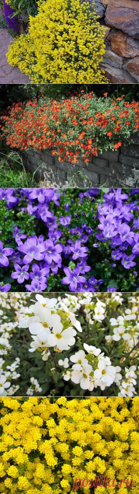 Почвопокровные многолетники: цветение весной