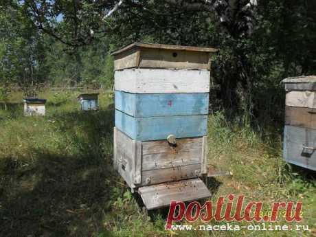 Содержание пчёл в 12 рамочном улье...