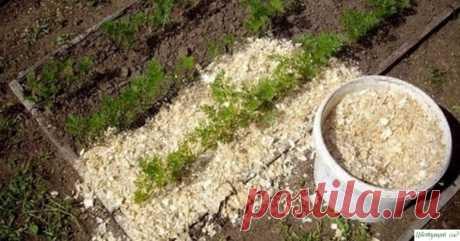 Используем опилки в огороде правильно — Садоводка