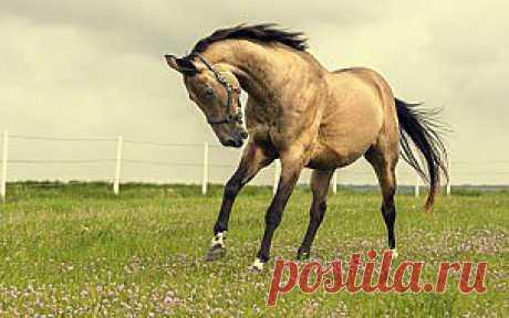 Обои Животные Лошади, обои для рабочего стола, фотографии животные, лошади, поле, природа Обои для рабочего стола, скачать обои картинки заставки на рабочий стол.