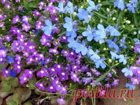 8 цветочных культур, которые сеют на рассаду в феврале / рассада / 7dach.ru