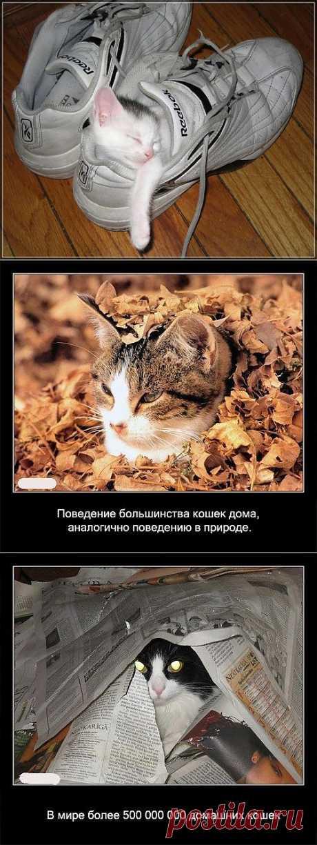 Кошки и холод..