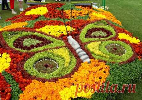The aunt Roza from Odessa knows how to make an unusual bed literally of nothing! Flower beds in old things — the best. — Kopilochka of useful tips