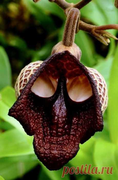 Растения с необычными цветами. Самые необычные цветы в мире | Гидра | Яндекс Дзен