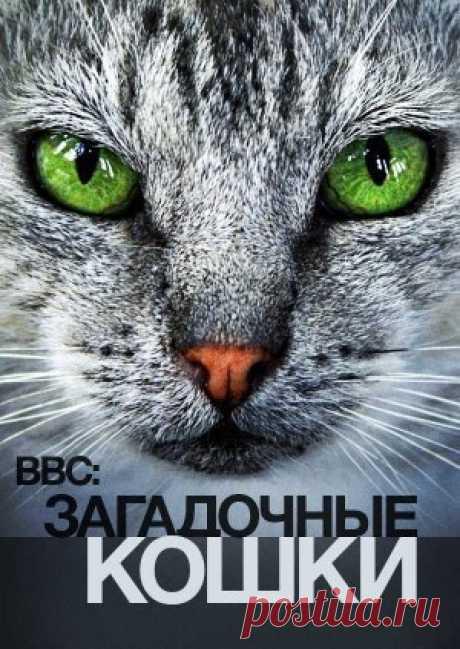 """Запись на стене Тайная Жизнь Кошек (2013)Жанр: документальныйДокументальный фильм """"Тайная жизнь кошек"""" познакомит вас с подробными исследованиями поведения кошек. Мы любим наших кошек и уверены, что отлично их знаем. Но у них есть тайная жизнь, которая скрыта от наших глаз. Ученые устраивают грандиоз.."""