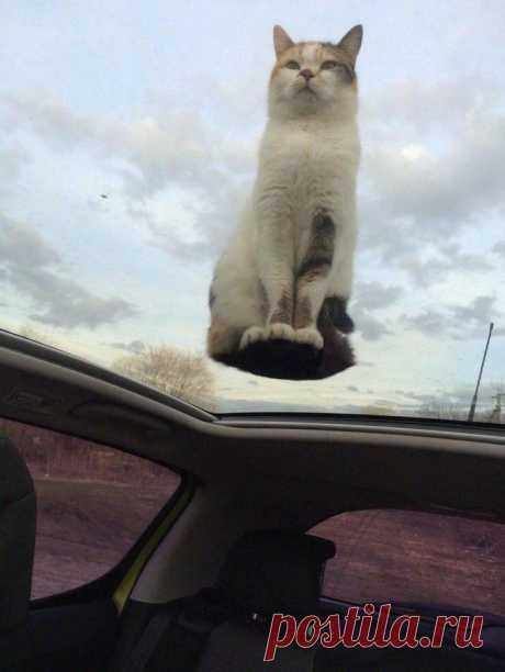 25 кошек, сломавших законы физики