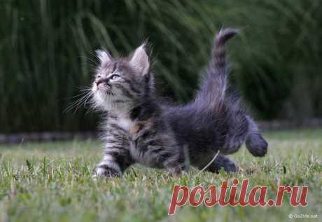 Котенеок | Котенок | eseniya75 | Flickr