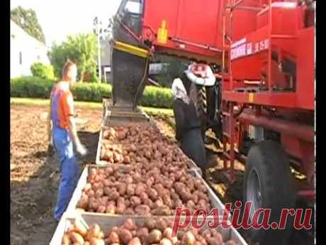 Выращивание картофеля в Норвегии. - YouTube