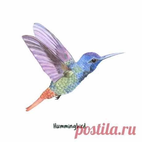 Descarga gratis Dibujado a mano colibrí aislado sobre fondo blanco Descubre miles de vectores gratis y libres de derechos en Freepik
