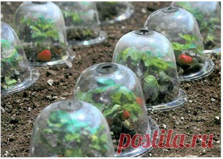 """10 шт./компл. 10 """"GrowAway Многоразовые Пластиковые Теплицы садовые клоши купольные растительные крышки Защита от мороза защита от замораживания Сельскохозяйственные теплицы    АлиЭкспресс"""