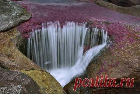 ДЛЯ ВСЕХ И ОБО ВСЕМ - Самая красивая река мира — Каньо Кристалес