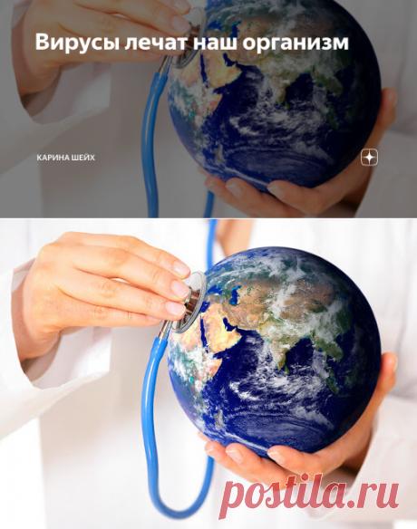 Вирусы лечат наш организм | Карина Шейх | Яндекс Дзен