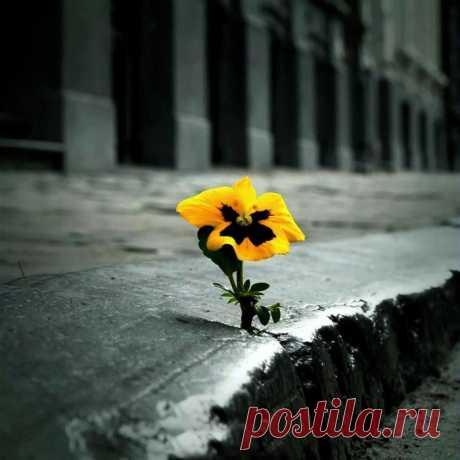 Прорастают цветы сквозь асфальт